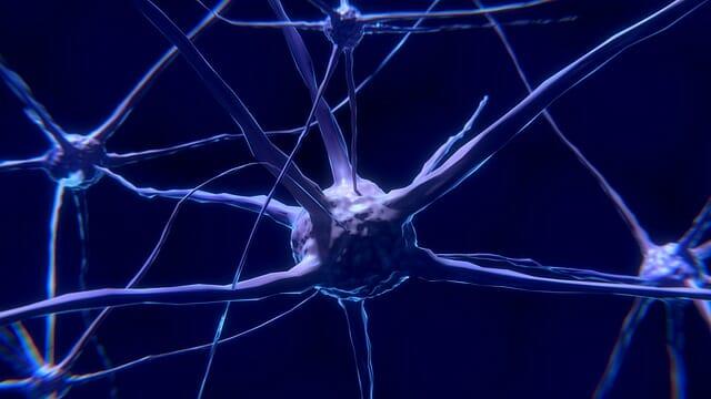 neurone, cellule nerveuse