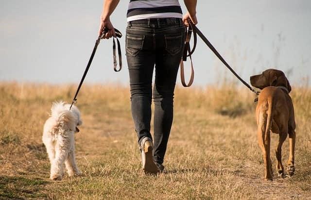 une femme se promène avec des chiens